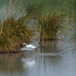 birding_saucedilla_galeria (12)