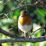 birding_saucedilla_galeria (16)