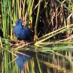 birding_saucedilla_galeria (18)