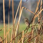 birding_saucedilla_galeria (19)