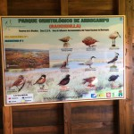 birding_saucedilla_galeria (30)