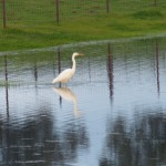 birding_saucedilla_galeria (37)