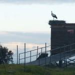 birding_saucedilla_galeria (38)