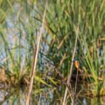 birding_saucedilla_galeria (5)