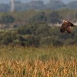 birding_saucedilla_galeria (7)